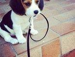 wyjdziesz ze mną?