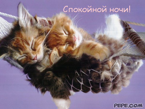Открытка спокойной ночи котёнок 97
