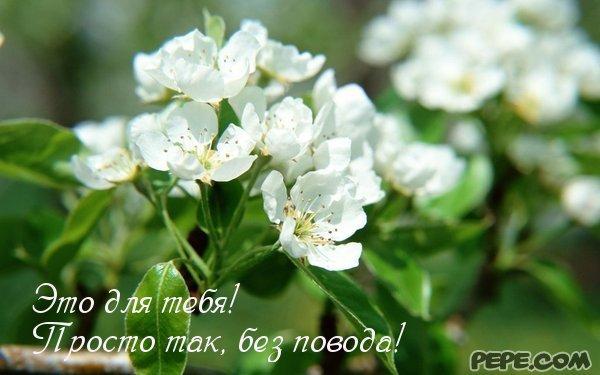 ... открытка следующая открытка: www.pepe.com/ru/showCard/-431235929