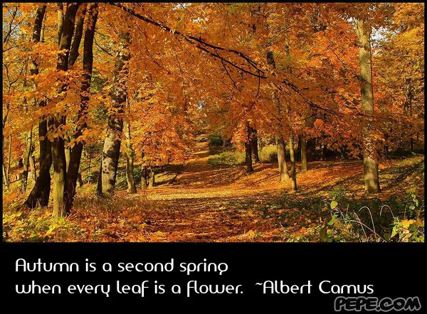 Autumn is a second spring when every leaf is a flower. ~Albert Camus - greeti...