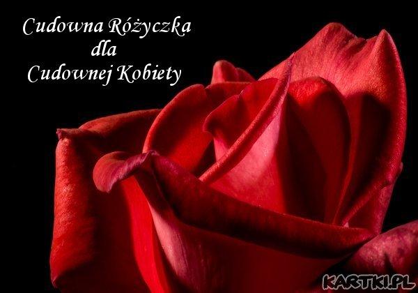 Cudowna Różyczka dla Cudownej Kobiety