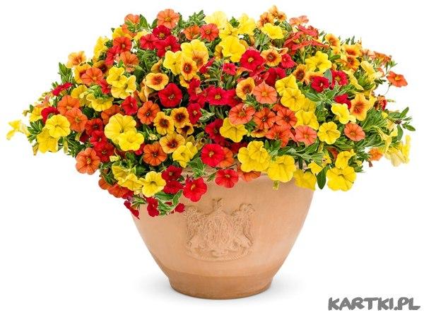 Картинки кашпо для цветов 3