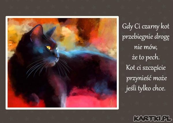 Gdy Ci czarny kot przebiegnie drogę nie mów,że to pech. Kot Ci szczęście może przynieść jeśli tylko chce.