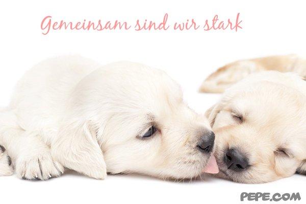 Gemeinsam sind wir stark Postkarte: www.pepe.com/de/showCard/gemeinsam-sind-wir-stark-2