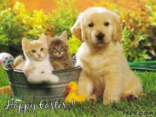 Image result for happy easter dog and cat images
