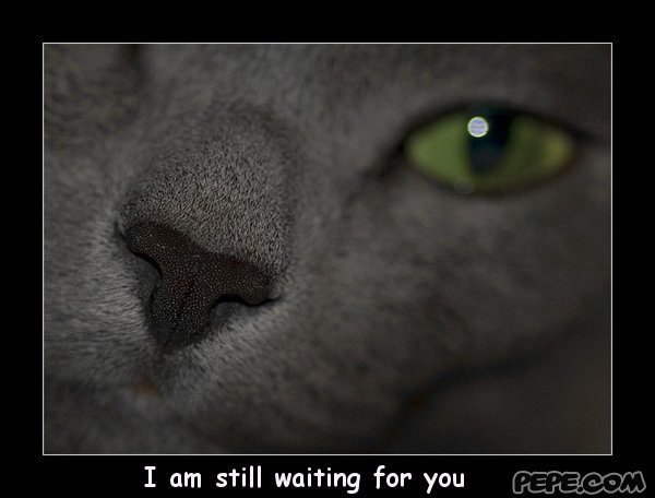 i am still waiting for you images - photo #5