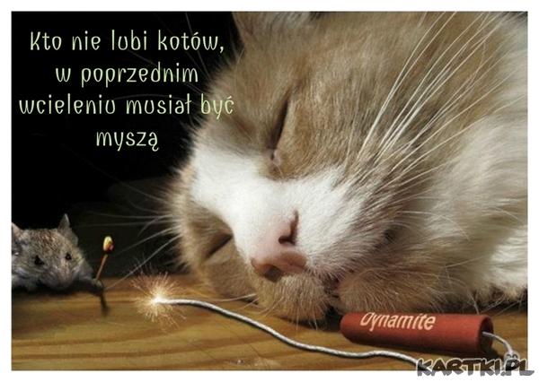 Kto nie lubi kotów w poprzednim wcieleniu był myszą