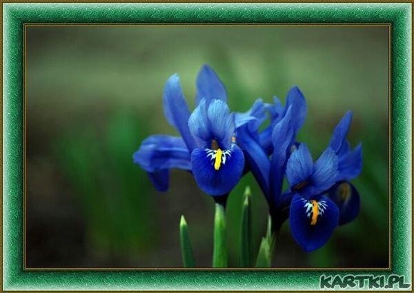 http://scouteu.s3.amazonaws.com/cards/images_vt/merged/mowa_kwiatow_irys_spotkajmy_sie_0.jpg