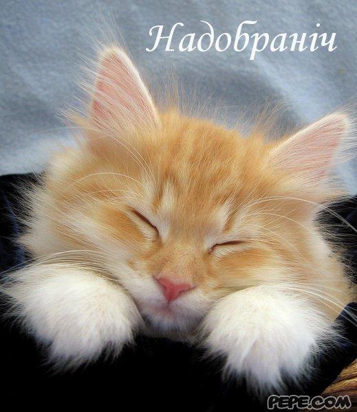 Попкорн (общество, политика) - Том XVI - Страница 3 Nadobranich_0