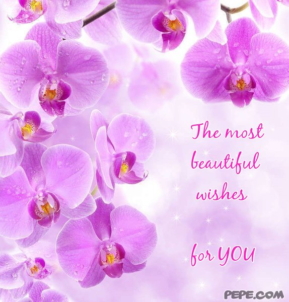 The most beautiful wishes