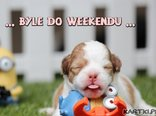 ... Byle do weekendu ...