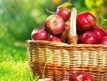 czerwone jabłuszka i pozdrowienia dla Ciebie