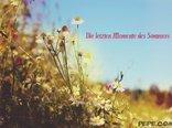 Die letzten Momente des Sommers