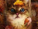 jesienna tęsknota