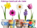 Kolorowe kwiatuszki dla Ciebie