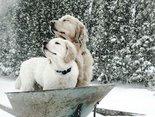 Niech pada śnieg...