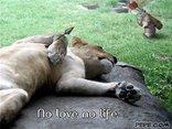 No l♥ve no life.