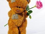 różyczkę Ci przynoszę i o wybaczenie proszę...