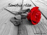 Samotna róża