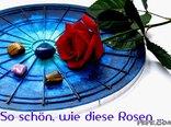 So schön, wie diese Rosen …