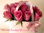 The most beautiful flowers for you!