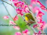 Wiosenne pozdrowienia...
