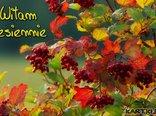 Witam jesiennie