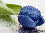 Zimny kwiatek