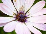 flower-46881.jpg