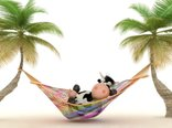 Mac%20Funny%20Wallpaper%20For%20a%20Relaxing%20Vacation-33213.jpeg