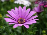 Purple_Flower_Stock_by_Sassy_Stock.jpg