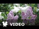 Polskie kwiaty - W Dniu Imienin