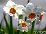 Wiosenne pozdrowienia
