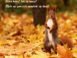 zaproszenie na jesienny spacerek