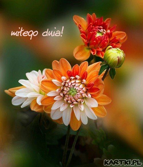 dla Ciebie te kwiatki i pozdrowienia  z życzeniami miłego dnia!