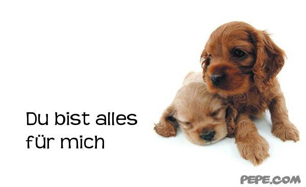 Image Result For Spruche Zitate Franzosisch Deutsch
