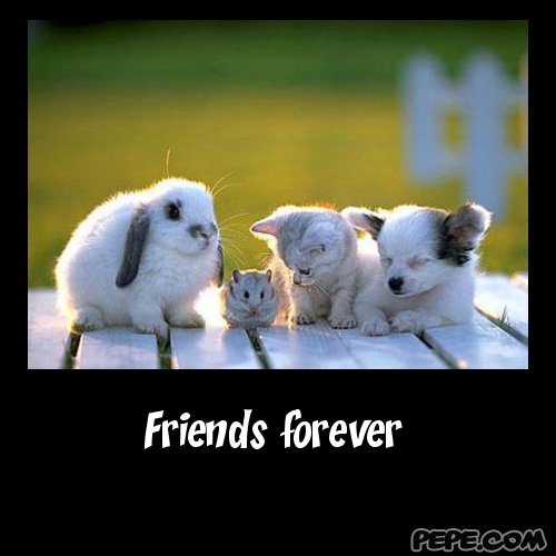 Friends Forever Funny Quotes: Clothes And Stuff Online: Quotes For Best Friends Forever