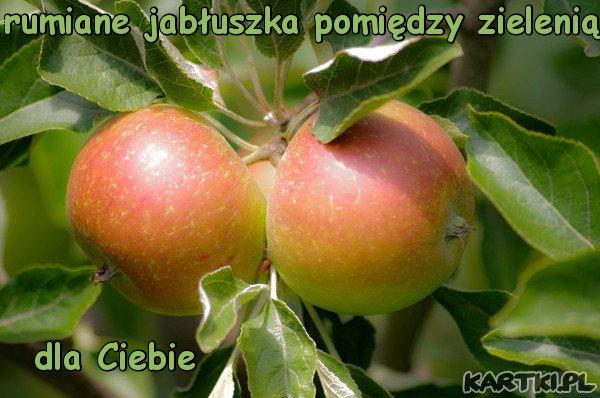 jesienią jesienią,sady się rumienią-czerwone jabłuszka pomiędzy zielenią