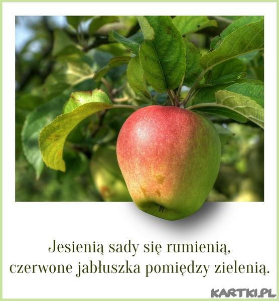 Jesienią sady się rumienią,czerwone jabłuszka pomiędzy zielenią