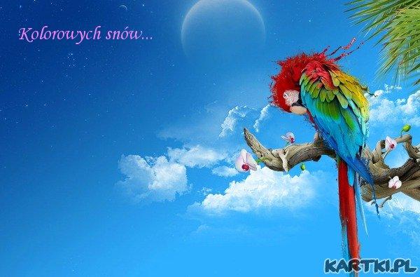 Kolorowych snów