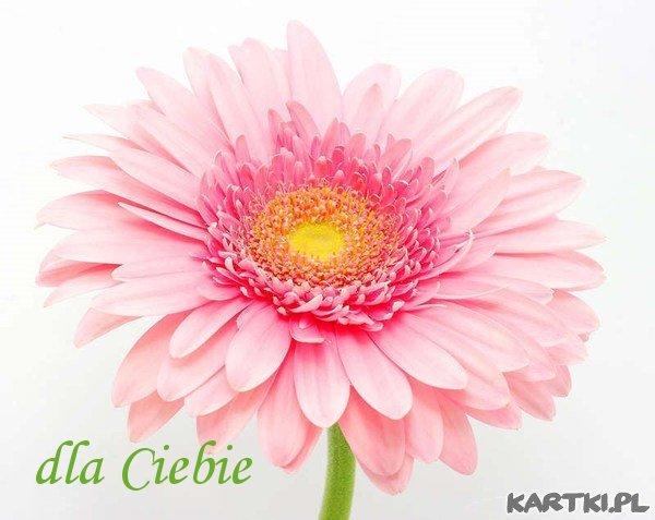 kwiatek dla kogoś bardzo miłego!