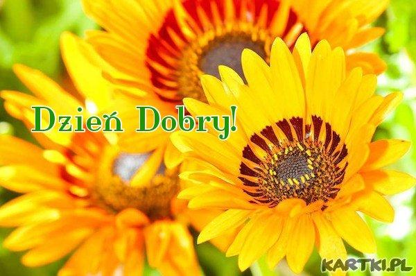 Kwiatki Dla Ciebie I Pozdrowienia Na Powitanie Nowego Dnia