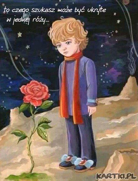 """""""Ludzie z Twojej planety hodują pięć tysięcy róż w jednym ogrodzie... i nie znajdują w nich tego, czego szukają... A tymczasem to, czego szukają, może być ukryte w jednej róży."""""""