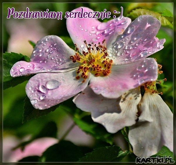 Dodatkowe Piękne kwiaty - KARTKI.pl RJ75
