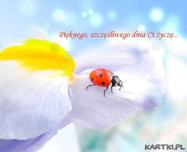 Pięknego, szczęśliwego dnia Ci życzę...