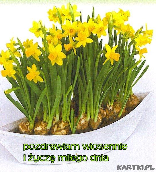 pozdrawiam wiosennie i życzę miłego dnia