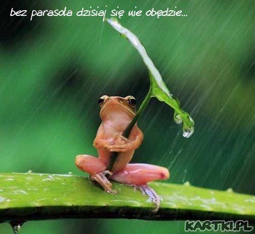 pozdrowienia i uśmiech na deszczowy dzień:)
