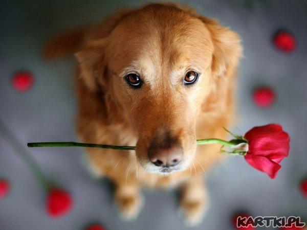 przyjmij różyczkę...