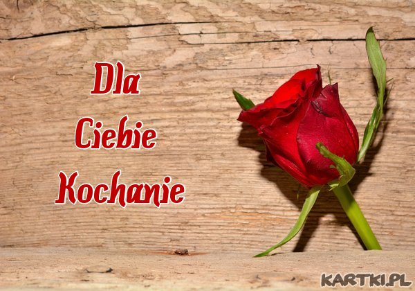 Róża dla Ciebie Kochanie