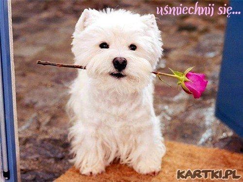różyczkę przynoszę i o uśmiech proszę